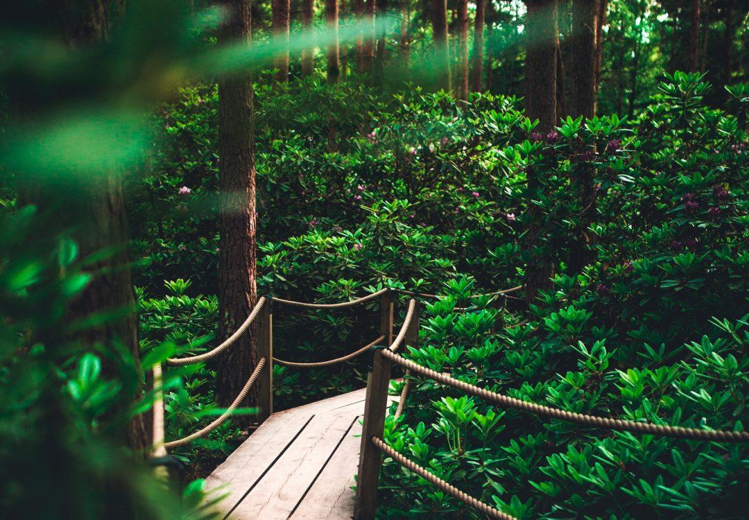 Kooloonbung Creek Nature Park
