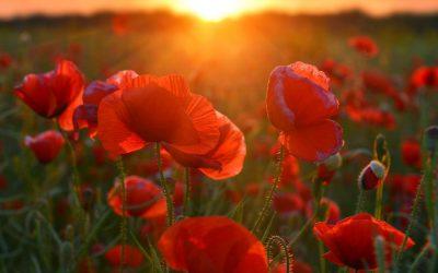 ANZAC Day 2020: Driveway at Dawn