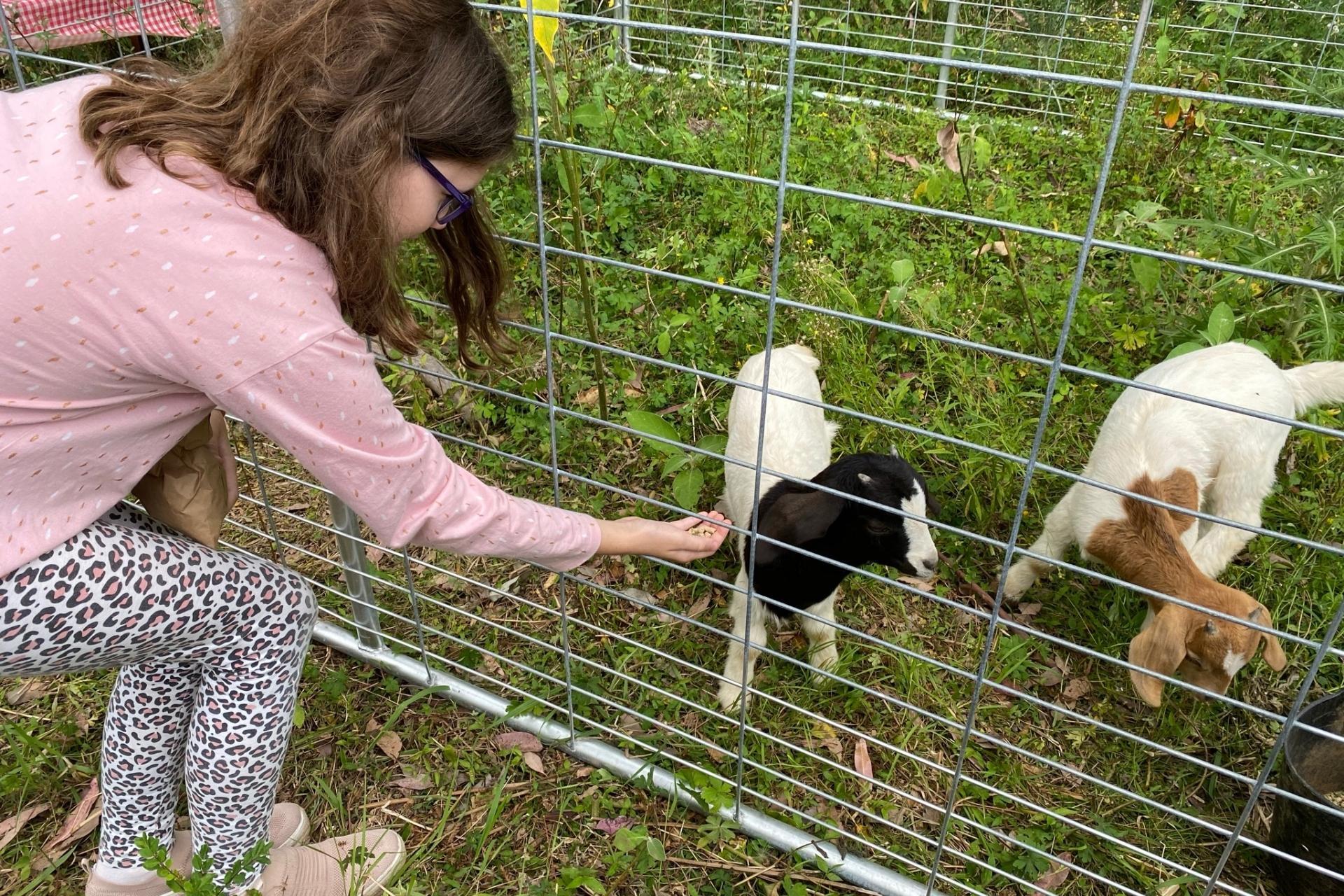 GROW Kids Farm Tour - Feeding the Baby Goats.