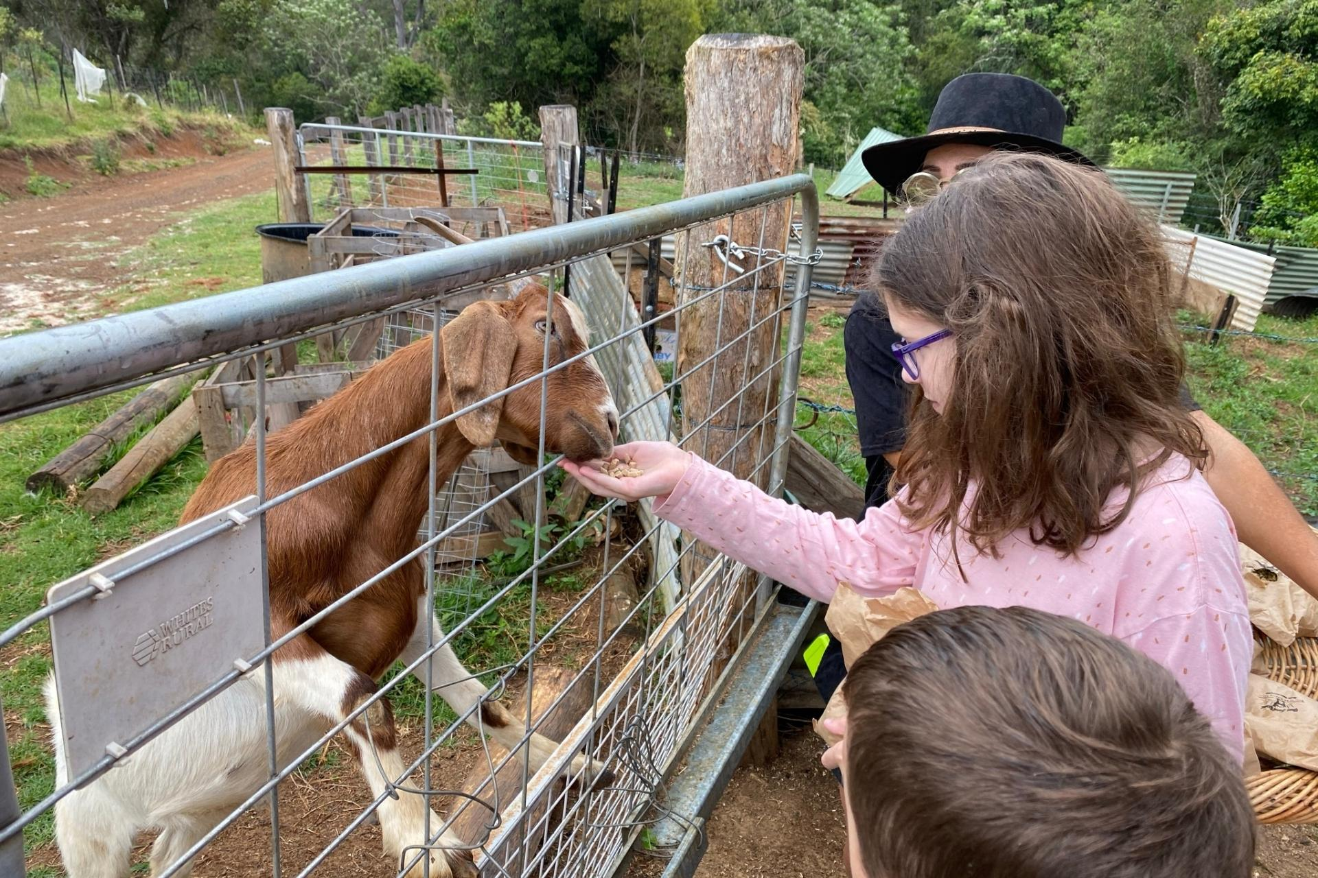 GROW Kids Farm Tour - Feeding the Goats.