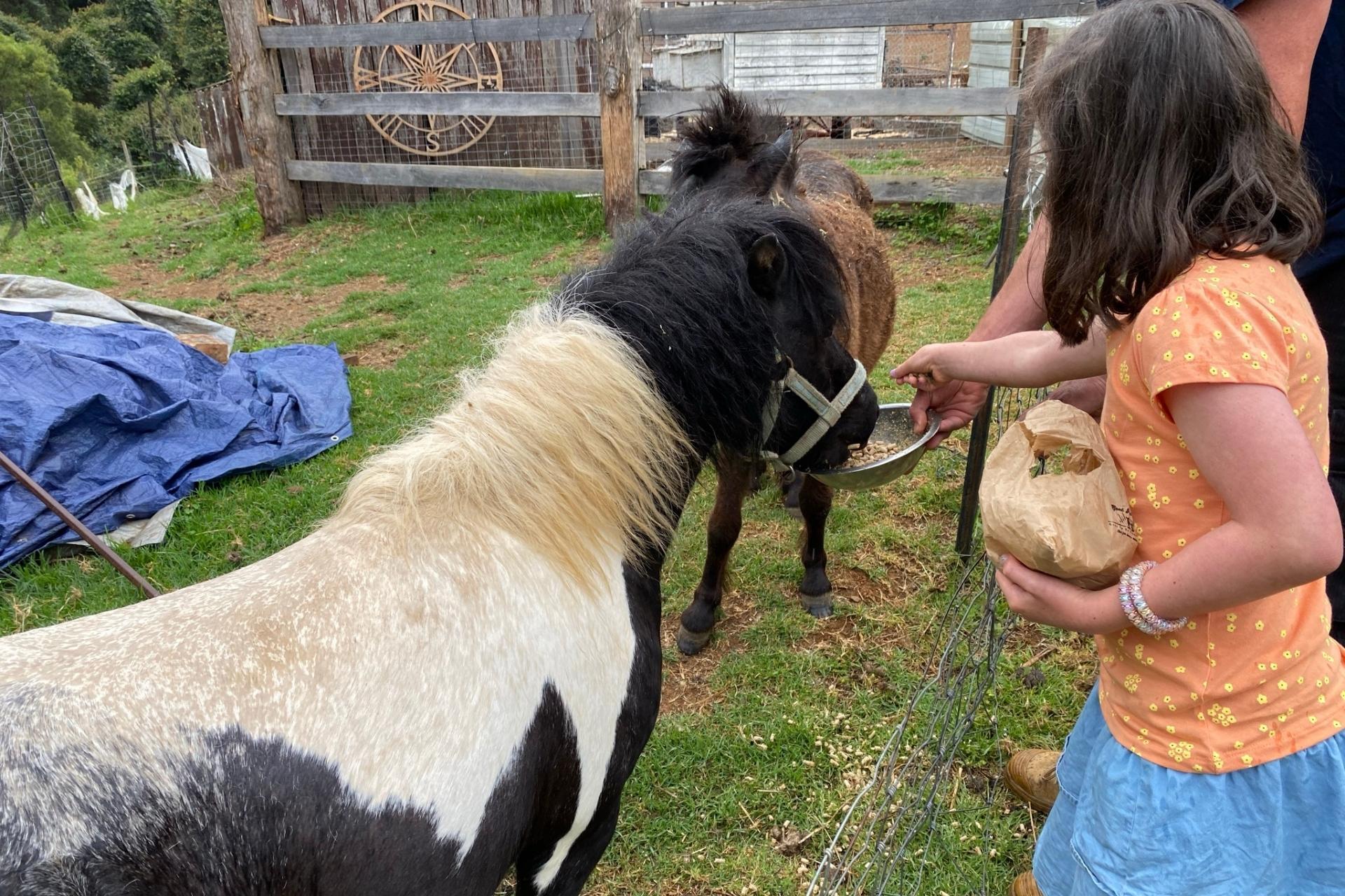 GROW Kids Farm Tour - Feeding the Miniature Horses.