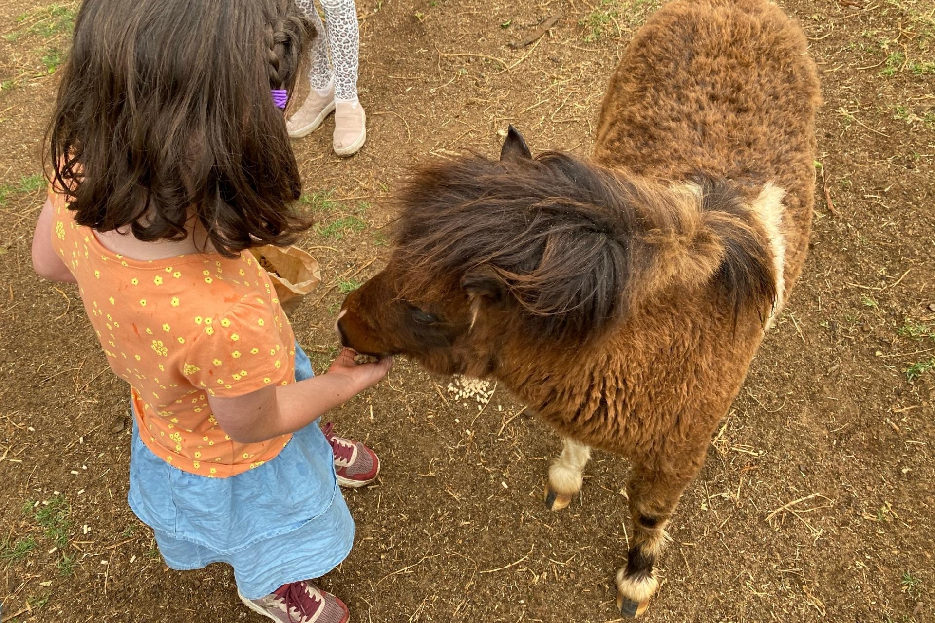 GROW Kids Farm Tour - Feeding the Pony.